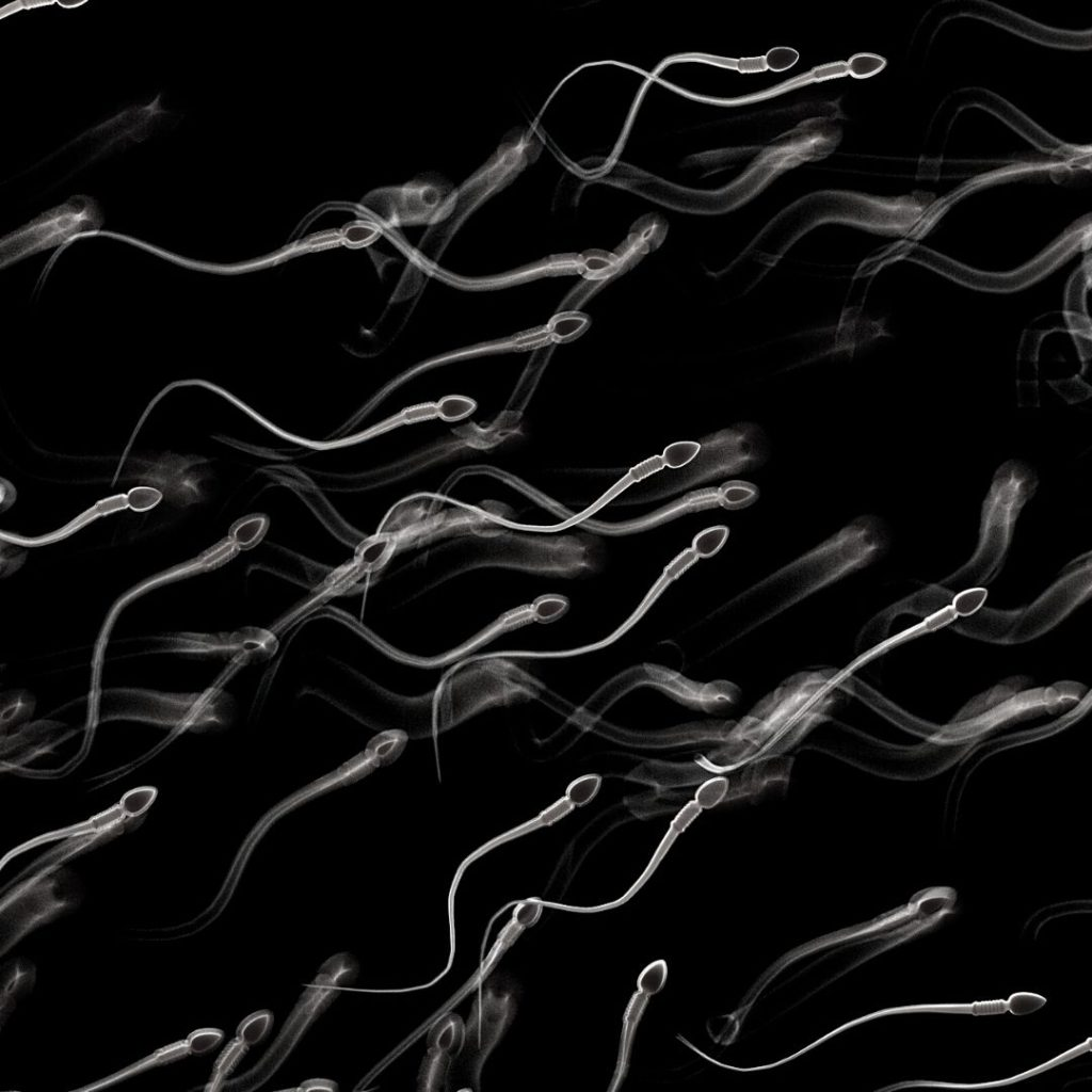 sperm facts